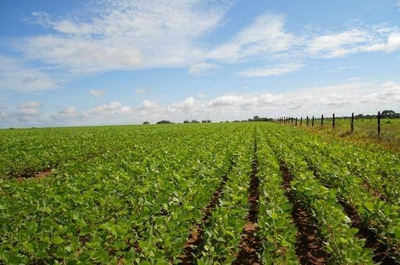 Fazenda Em Araguaçu - To, Dupla Aptidão - 427