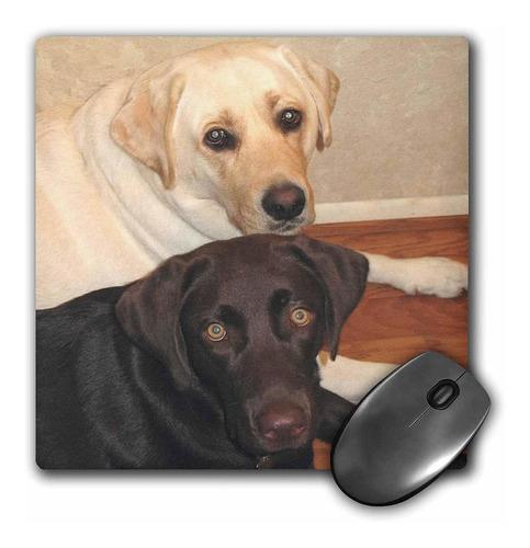 3drose Llc 8x 8x 0.25inches Labrador Retriever Mouse P