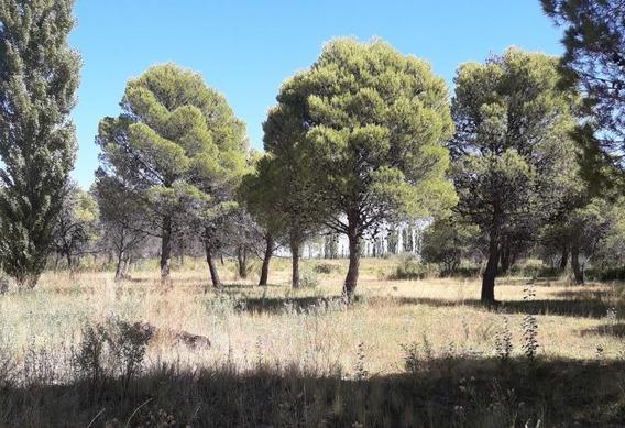 Campo En Venta En Sargento Vidal