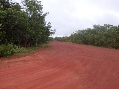 Fazenda Em Pedro Afonso - To - Ótima Para Pecuária - 495