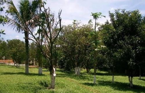 Imagem 1 de 8 de Chácara Para Venda - 9661