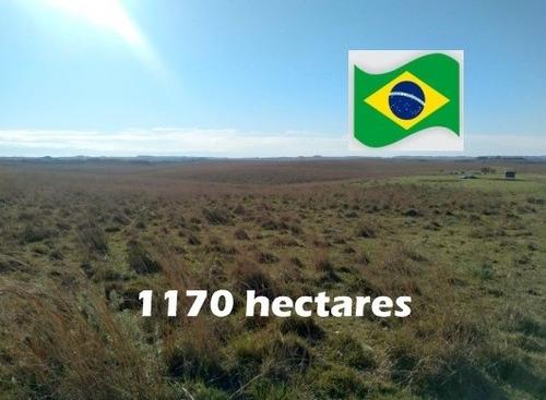 Fazenda Com 1170 Hectares Em Alegrete