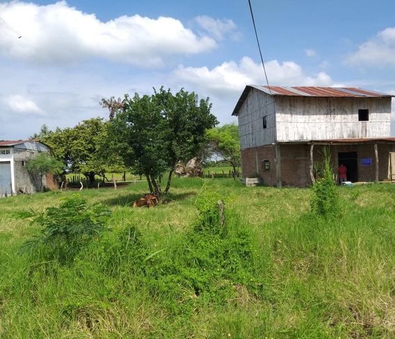 Se Vende Hacienda Ganadera-arrocera Daule-salitre