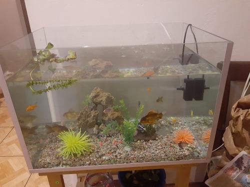 Pescera, Acuario Con Vidrio De 6 Mm Y 8 Mm