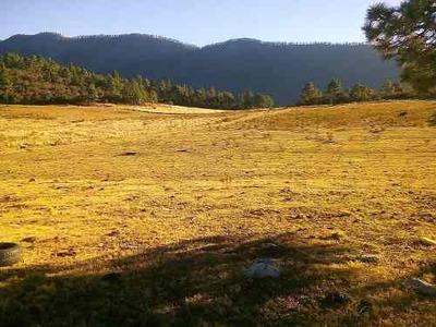 Venta De Terreno De 9 Hectáreas, En La Sierra De Arteaga
