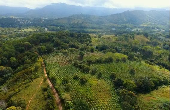 Finca De 8,700 Tareas Con Vocación Ganadera Y Agrícola Bonao