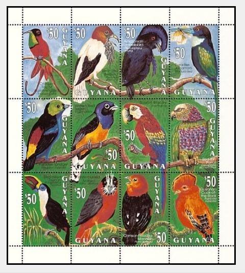Dams Guiana Aves Pássaros Fauna Papagaios