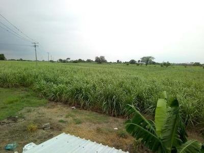 Ranchos Cañeros En Tierra Blanca, Veracruz. Caña Cañaveral