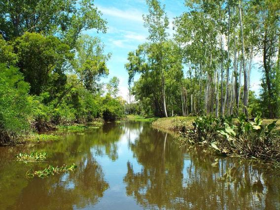 Lote Delta Tigre Isla -cuotas Pesos - Escritura - Dueño