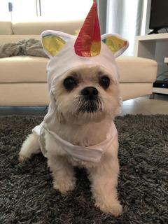 Disfraz Para Perro Económico Barato Gato Mascota Halloween