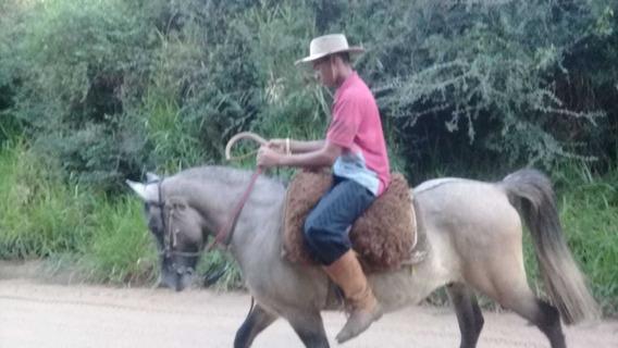 Vendo Cavalo Bom De Laço E Bem Manso
