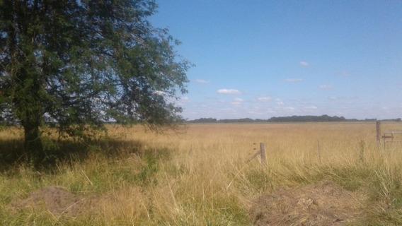Vende Campo 10has Localidad Ranchos-apto Agropecuario