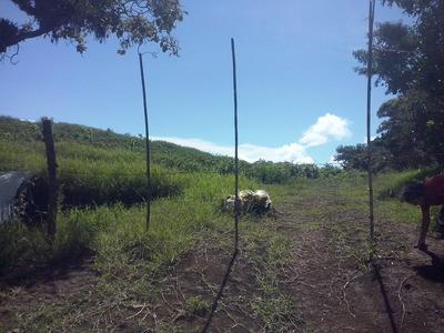 Se Alquila Terreno Para Cultivo O Cria De Animales