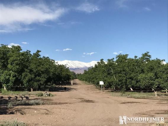 Campo En Venta - Calingasta, Provincia De San Juan - Finca De Nogales En Producción
