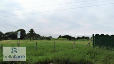 Única, 13.000m², Plana, 75% Livre De Vegetação, Barigui/araucária A 1.500m Do Contorno - Te0262