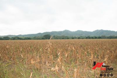 Venta De Finca Agricola