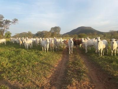 Fazenda A Venda Em Porto Murtinho - Ms (pecuária) - 1130