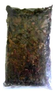 Quebra-pedra P/ Chá, 500 Gramas + 100 Cápsulas Do Extrato