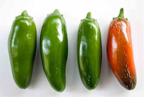 Imagem 1 de 7 de Pimenta Jalapeno Jalapeño Pepper 30 Sementes Importadas