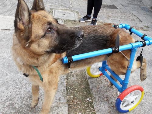 Carrito O Silla De Ruedas Para Perros Grand Con Discapacidad