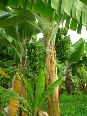 Finca Permuto San Juan De Rioseco Clima Medio, Cultivos