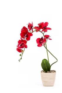 Orquídea Planta Artificial Roja