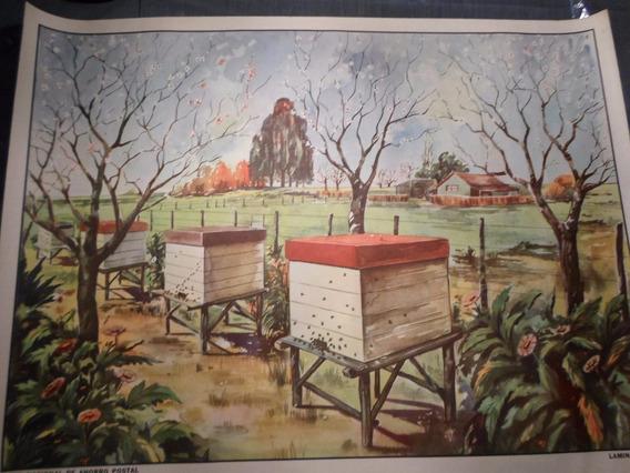 Poster Antiguo Caja Nacional De Ahorro Postal Nº 15