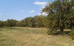 Fazenda Em Mococa Sp, Com 118 Alqueires De Terra Mista E Levemente Ondulada