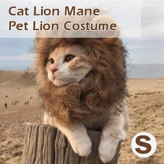 Gato León Melena Mascota León Disfraz Mascota León Peluca De