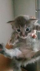 Gatos Para Adopción.