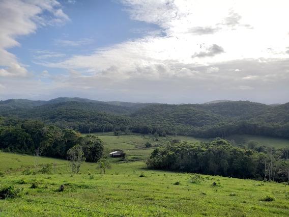 Fazenda Sito, 61 Ha (610.000 M2) , Proximidades Registro, Sp