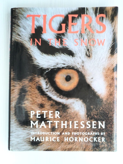 Livro Tigers In The Snow - Ilustrado - Tigres Siberianos
