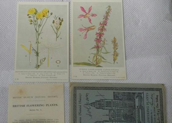 Postales Antiguas Museo Británico Plantas 1925 Colección