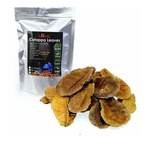 Dr. Moss Catappa Leaves - Indian Almond Leaves Medium Catapp