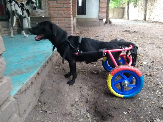 Turbocan Carritos O Sillas De Ruedas Para Perros
