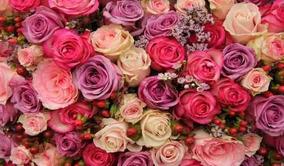 Cortina De Festa Flores Rosas Cor De Rosa 4,00x2,30 M