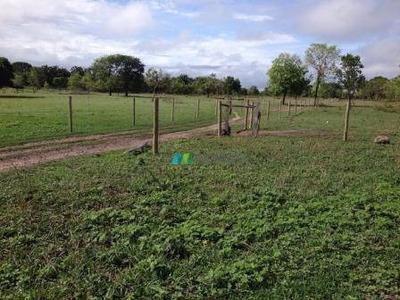 Fazenda 1147 Ha Região Januária (mg) - Codigo: Fa0160 - Fa0160