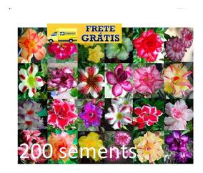 200 Sementes De Rosa Do Deserto(adenium Obesum)mix De Cores,