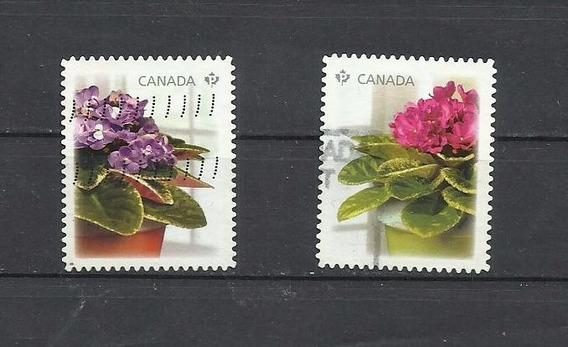 Canada- Violeta Africana- Usados- 2010
