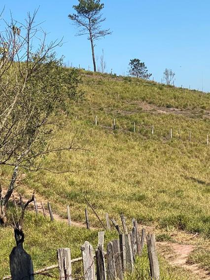 17c Vendo Meu Lindo Terreno Em Areá Rural