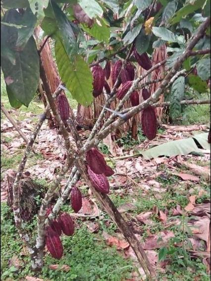 De Venta Finca En La Provincia De Los Ríos - Guayacánes