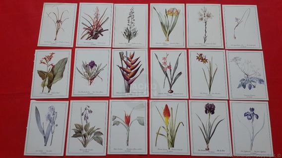 Tarjetas Postales Antiguas De Rosas Joseph Redouté Les Roses