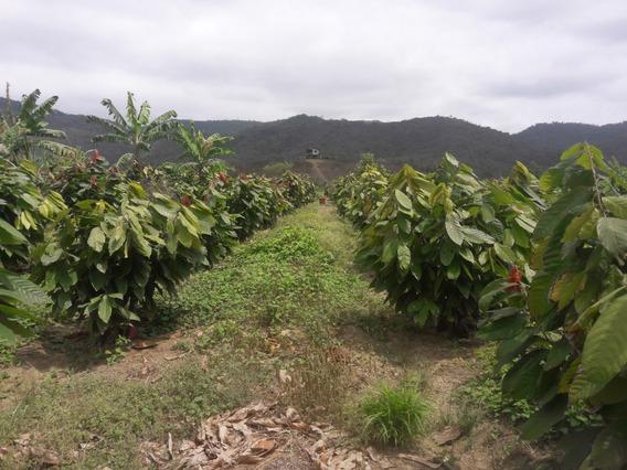 Vendo Finca En Santa Elena 20 Hectareas