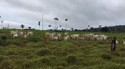 Fazenda Para Venda Em Nova Monte Verde, Área Zona Rural Nova Monte Verde/mt R$ 20.000.000 - 36856