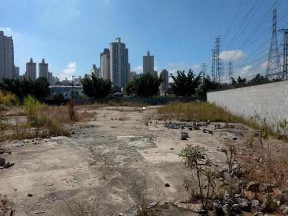 Terreno São Bernardo Do Campo - 7701ig