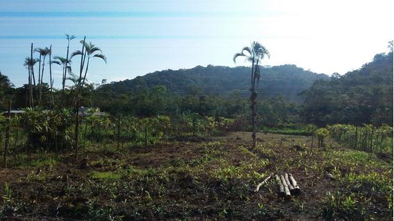 Áreas De Chácara R$ 5 Mil De Entrada Em Mongaguá Ref 7751w