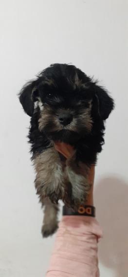 Cachorro Schnauzer Mini Negro Y Plata Exclusivo Misminisch