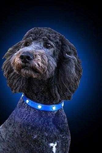 Tuff Tails Led Lightning Collar Para Perro? Usb Recargable S