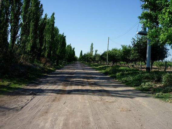 Finca Organica En San Rafael, Mendoza , Ideal Inversor!!