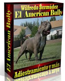 El American Bully Adiestramiento Y Más.